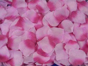 Лепестки сиреневых роз